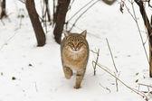 Cat on snow — Stock Photo