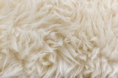 Sheep fur texture. Macro. — Stock Photo
