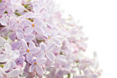 Beautiful spring background with lilac bouquet. — Stock Photo