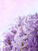 Beautiful spring background with lilac bouquet. — Photo