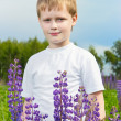 Cute boy in lupine field in sunny day — Stockfoto