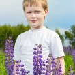 Cute boy in lupine field in sunny day — Stock Photo