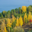 Excellent autumn landscape with yellow, red and green leaves on the trees. — Stock Photo
