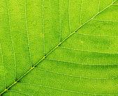 Leaf of a plant closeup. Macro. — Stock Photo