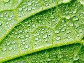 Abstract green leaf with water drops. — Stock Photo