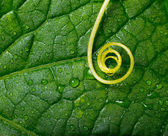 Abstract yellow plant swirl over green leaf with water drops. — Stock Photo