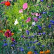 Stock Photo: Summer meadow