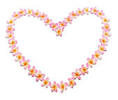 Frangipanis Arranged in Heart Shape — Stock Photo