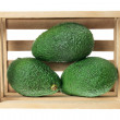Stock Photo: Avocados in Crate