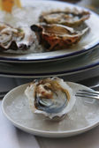 The oysters in the ice on the plate — Stock Photo