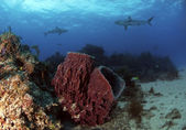 Fish Tail Reef — Stock Photo