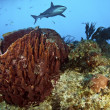 Fish Tail Reef - Stock Photo