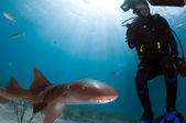 Nurse Shark with Diver — Foto Stock