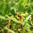 Stock Photo: Bee on green leaf full of pollen