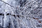Zimní stromy pozadí — Stock fotografie