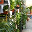 Plants in garden center - Stock Photo