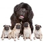 Big Dog Small Dog — Stock Photo #10122659
