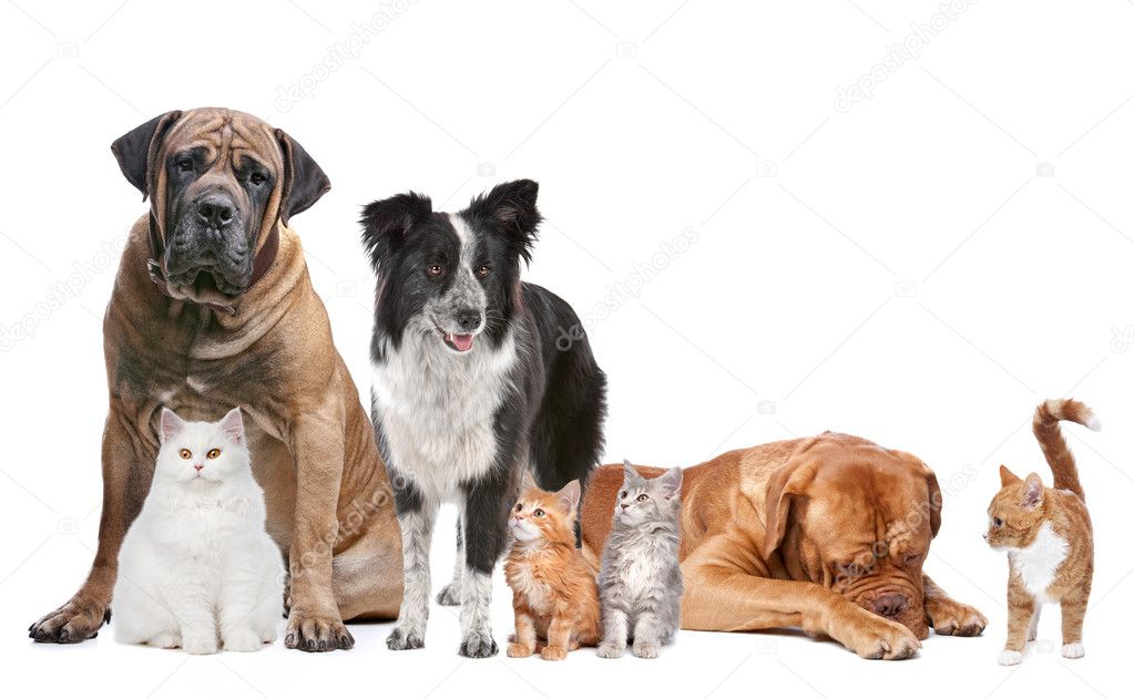 Group of Cats and Dogs in front of a white background — Stok fotoğraf #7999379