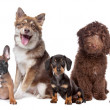 Stock Photo: Large group of puppies