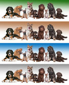 Group of puppies on diverse gradient backgrounds — Stock Photo