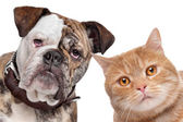 Dog and Cat — Stock Photo