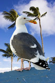 Seagull perched on a rail with palm trees in the background. — Stock Photo