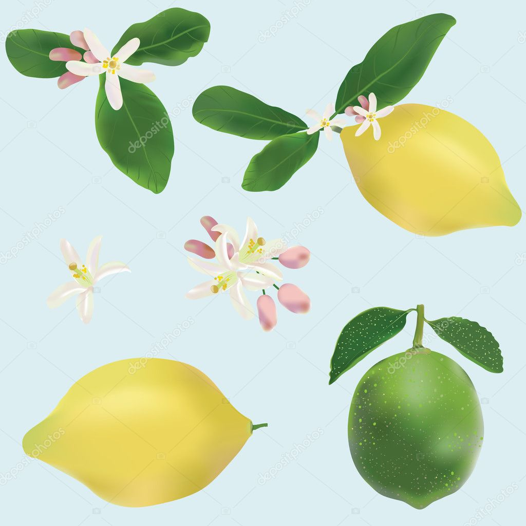 Lemon and lime fruits and flowers icon vector set — Stock Vector #9320716