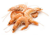 Fresh prawn — Stock Photo