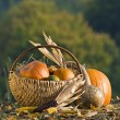 pumpkins — Stock Photo #8795831
