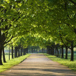 Stock Photo: Green trees