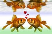 黄金鱼 — 图库照片