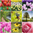 Royalty-Free Stock Photo: Flower collage