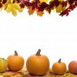 Fall Frame — Stock Photo #9025331