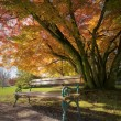 Park Bench — Stock Photo #9045297