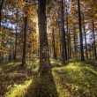 Stock Photo: Backlight Forest