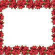 Frame star flower — Stock Photo