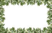 Flower Frame — Stock Photo