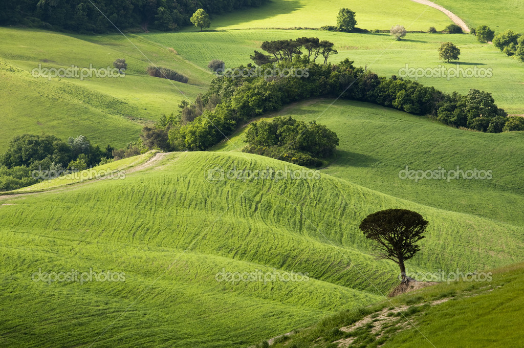 Green tuscany landscape in spring time  Stock Photo #9456608