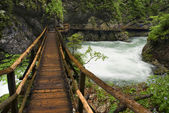 Wooden Path — Stock Photo