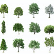 Set Trees. Vector — Stock Vector #9347078