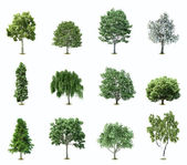 Set Trees. Vector — Vettoriale Stock