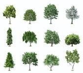 Zestaw drzew. wektor — Wektor stockowy
