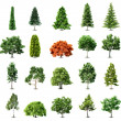 Set of trees isolated on white background. Vector — Stock Vector #9407838