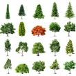 Stock Vector: Set of trees isolated on white background. Vector