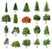 Ensemble d'arbres isolés sur fond blanc. vector — Vecteur