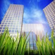 Royalty-Free Stock Photo: Grass and skyscrapers