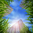 Grass and skyscrapers - Stock Photo