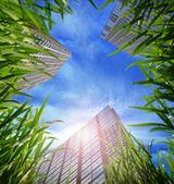 Hierba y rascacielos — Foto de Stock