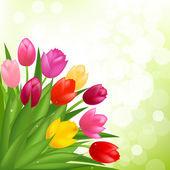 Bouquet Of Tulips — Stock Vector