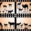 animales de granja — Vector de stock  #9721945